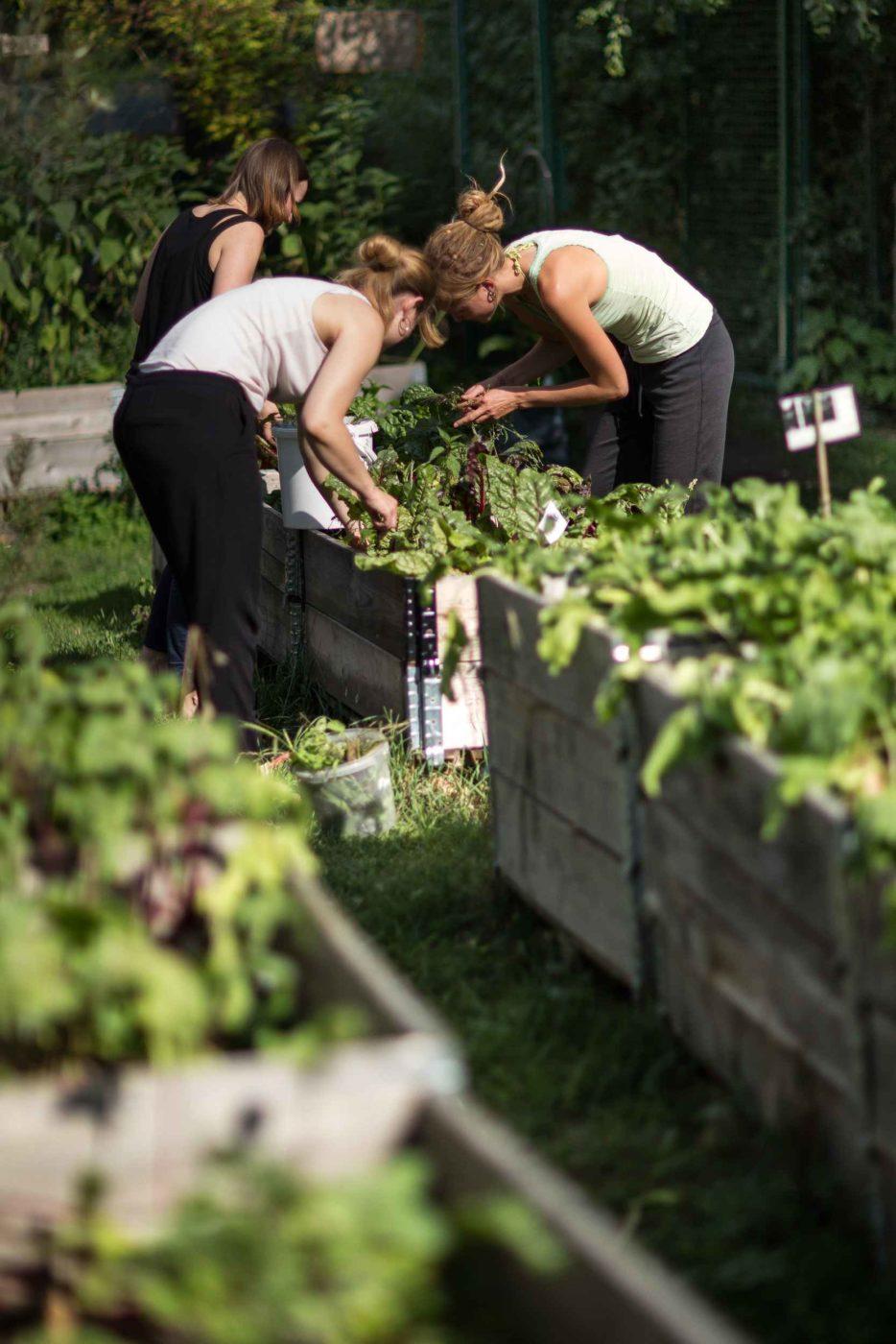 Soziale und urbane Landwirtschaft im Leipziger Westen mit ANNALINDE